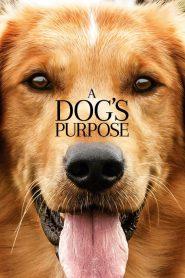 หมา เป้าหมาย และเด็กชายของผม A Dog's Purpose (2017)