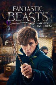สัตว์มหัศจรรย์และถิ่นที่อยู่ Fantastic Beasts and Where to Find Them (2016)