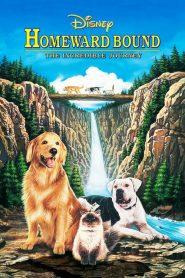 2 หมา 1 แมว ใครจะพรากเราไม่ได้ Homeward Bound: The Incredible Journey (1993)