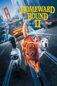 2 หมา 1 แมว ใครจะพรากเราไม่ได้ Homeward Bound II: Lost in San Francisco (1996)